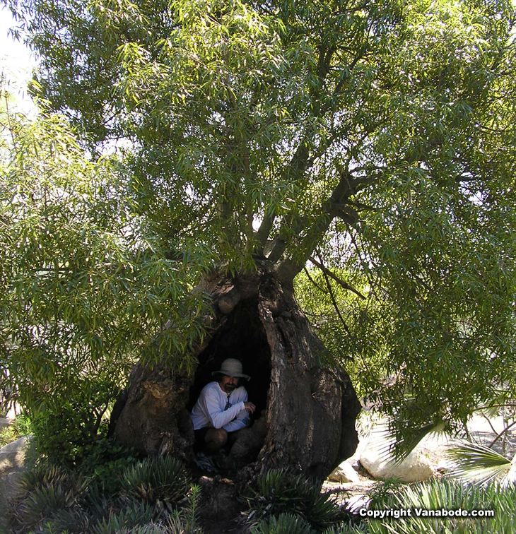 picture of jason in trunk of tree in botanical gardens in san diego