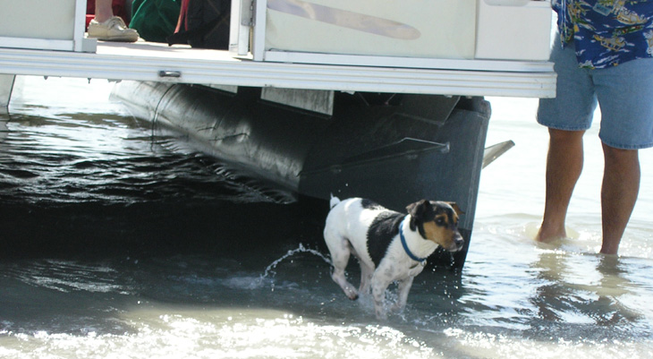 picture of pontoon boat and dog at beach