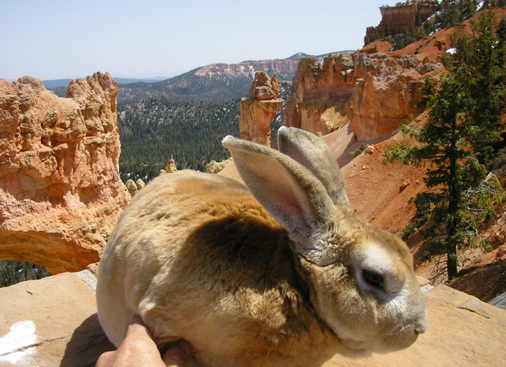 picture of bugsy visiting bryce canyon park in utah