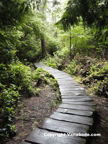 cape flattery cedar boardwalk trail picture
