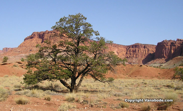 picture taken on hike at capitol reef national park