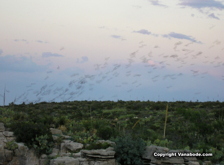 picture of bats in carlsbad new mexico