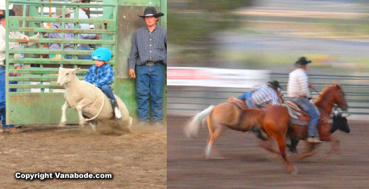 cascade idaho valley county rodeo mutton buster and horse roping