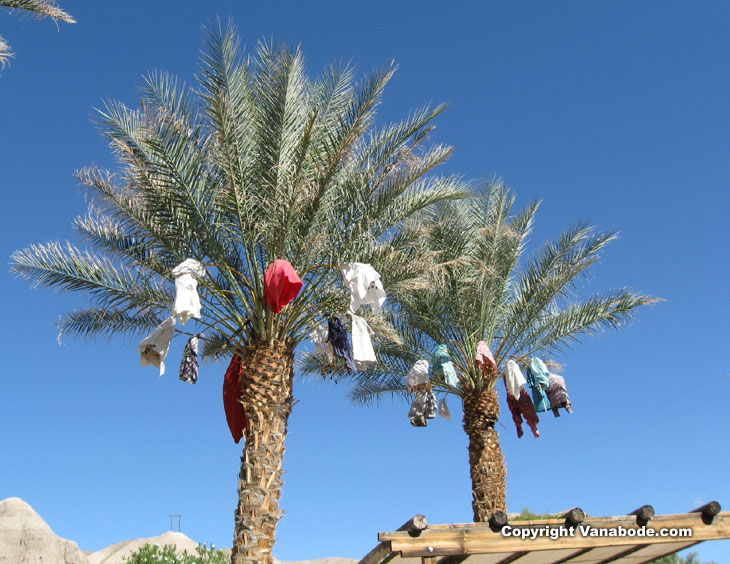 date palm trees at china ranch picture