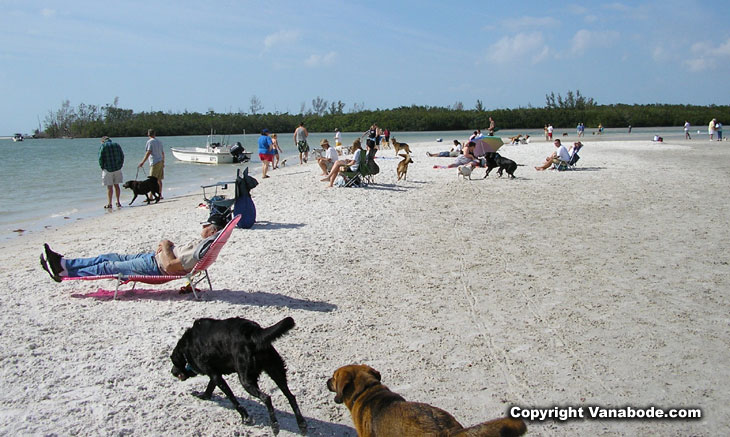 dog beach in bonita fl picture
