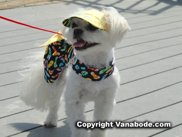 dog wearing a hat on myrtle beach boardwalk
