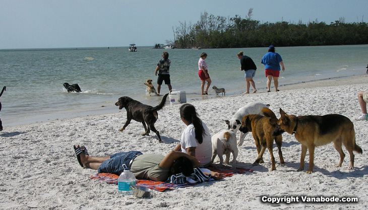 picture of dogs and people at beach
