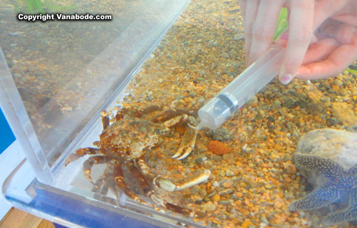 hand feeding a crab at teh aquarium