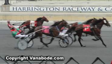 Harrington for harness racing
