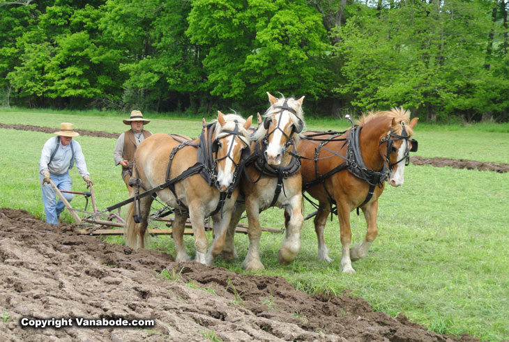 3 horse plow at the howell living history farm