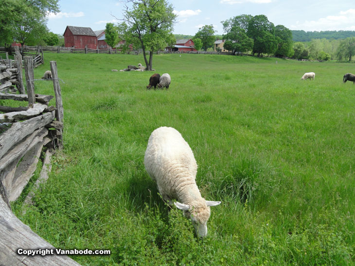 howell living history farm sheep fields