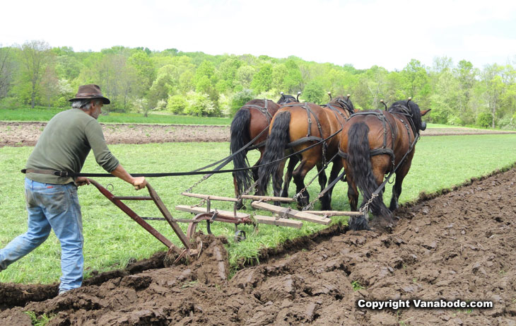 farmer plows for corn using three horses at once