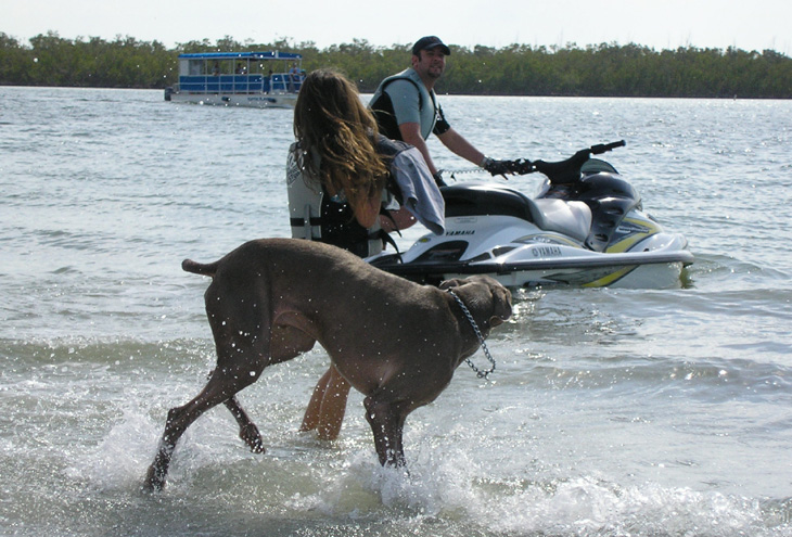 picture of jetski and dog at bonita beach