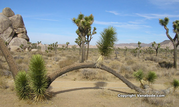 Joshua Tree National Park California picture