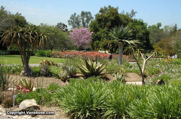 Los Angeles Arboretum Botanic Gardens California