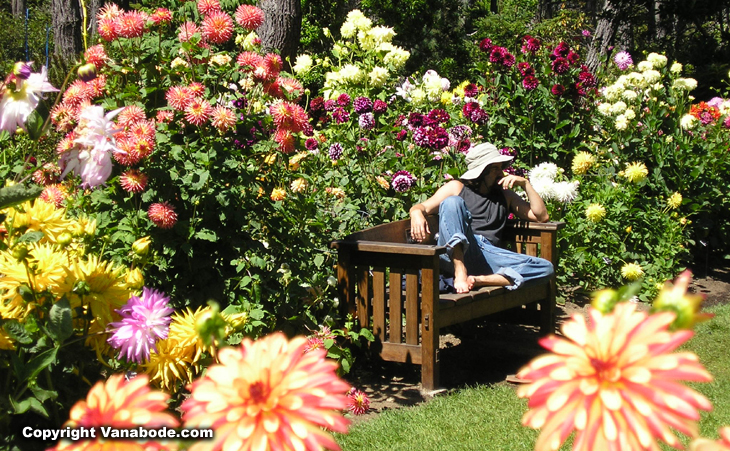picture of jason on bench amongst dahlias in california