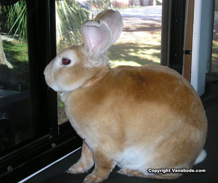 Picture of guard rabbit