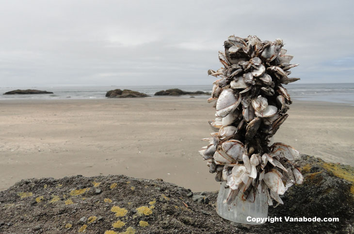 picture of barnacles taking over a water bottle on olympic coast