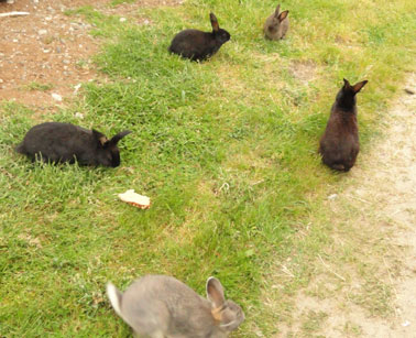 photo of rabbits gone wild at olympic game farm