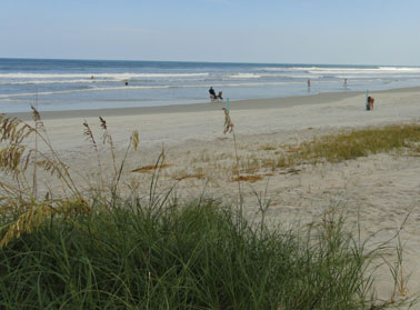 ormond beach sand dunes and sea oats picture