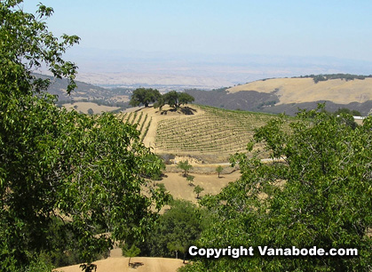 Picture of Paso Robles vineyards in California