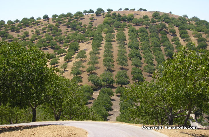 Scenic drive in Paso Robles picture