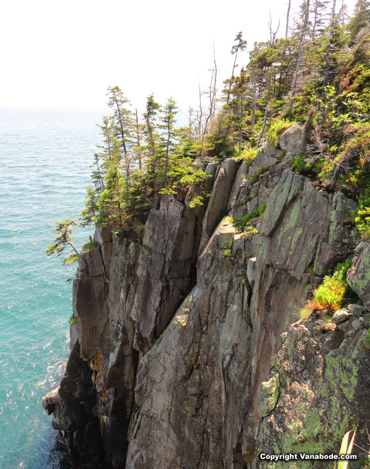 cliffs in quoddy head lighthouse state park in maine