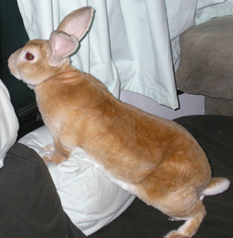 picture of rabbit standing guard in the rv