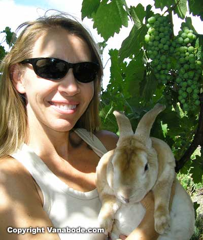 Kelly and Bugsy posing under the summer grape harvest in a winery in Paso Robles California