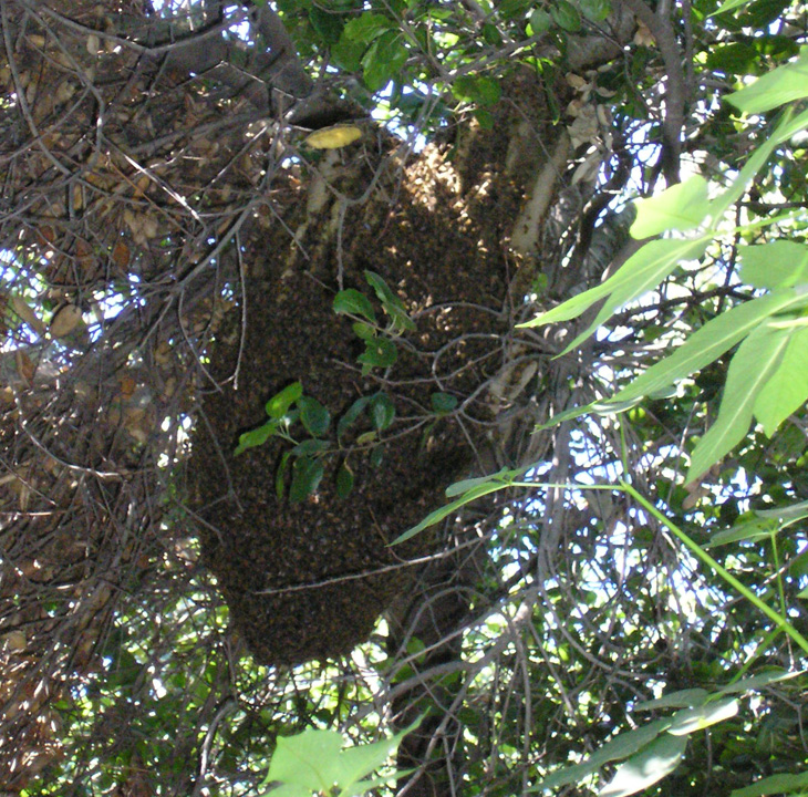 rancho santa ana gardens bee hive picture