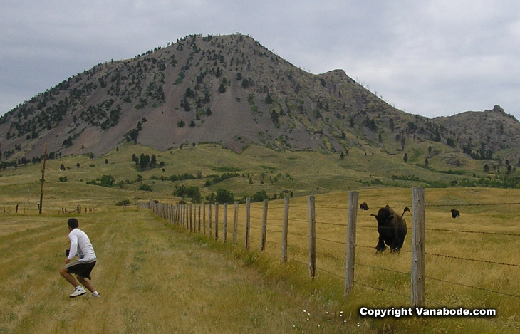 Picture of Jason being chased by a buffalo at Bear Butte Park
