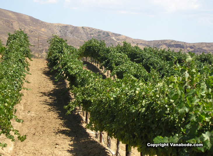picture of vineyard in temecula california