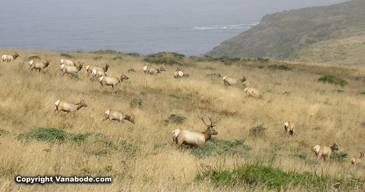 Tule Elk Reserve at Point Reyes picture