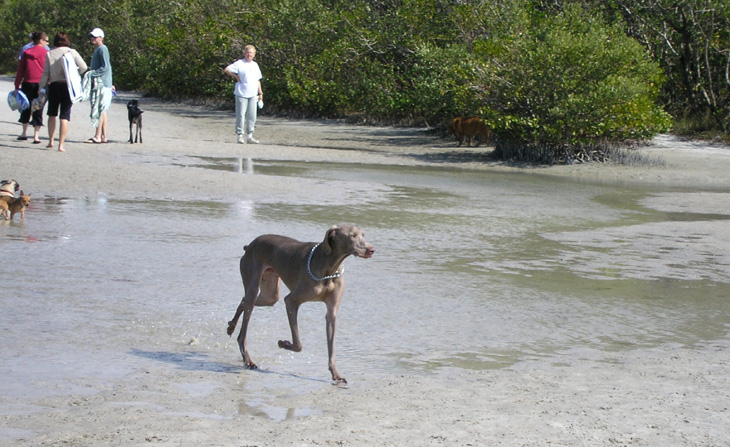 water dog at beach picture